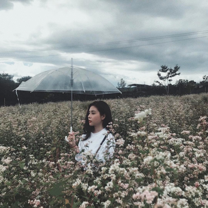 Chụp hình bên cánh đồng hoa tam giác mạch Đà Lạt