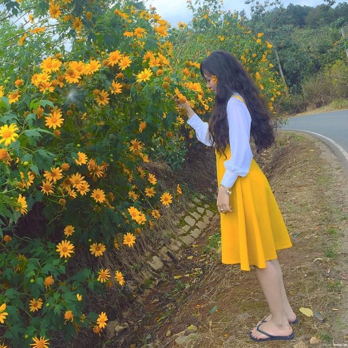 Dã quỳ là loài hoa khiến ai cũng mê đắm với vẻ đẹp của nó