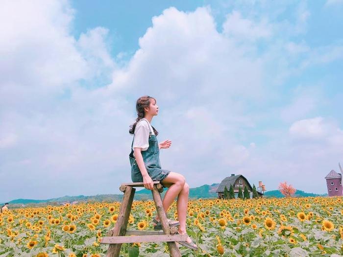 Checkin tại cánh đồng hoa hướng dương Bắc Giang