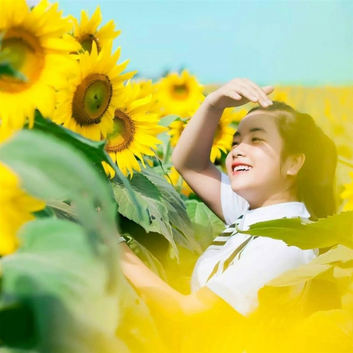 Chụp hình tại cánh đồng hoa hướng dương Nghệ An