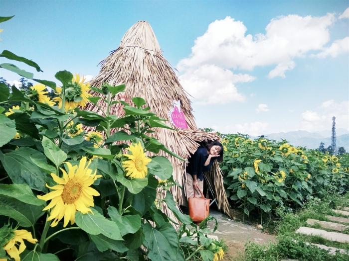 Chụp hình tại cánh đồng hoa hướng dương Sa Pa