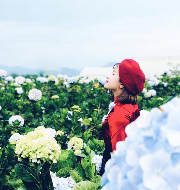 Thích thú ngắm nhìn những bông hoa cẩm tú cầu xinh đẹp