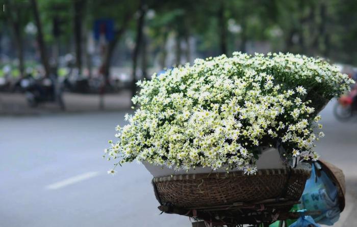 Hình ảnh hoa cúc mi trên những gánh hàng hoa của những phụ nữ dọc phố