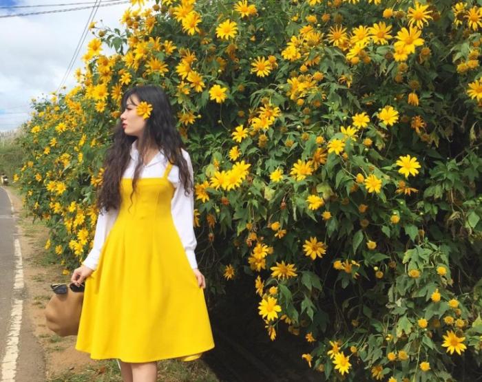 Say lòng hoa dã quỳ Đà Lạt khi chạm ngõ vào mùa